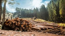 Why Weyerhaeuser Shares Fell 14.9% in May