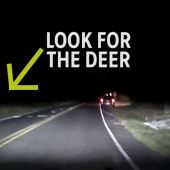 MUST SEE: Video shows deer attacking driver who struck it