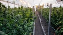 Why Canopy Growth, Mitek Systems, and Ionis Pharmaceuticals Slumped Today