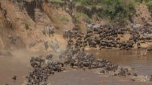 Wildebeest migration watched by only a handful of tourists