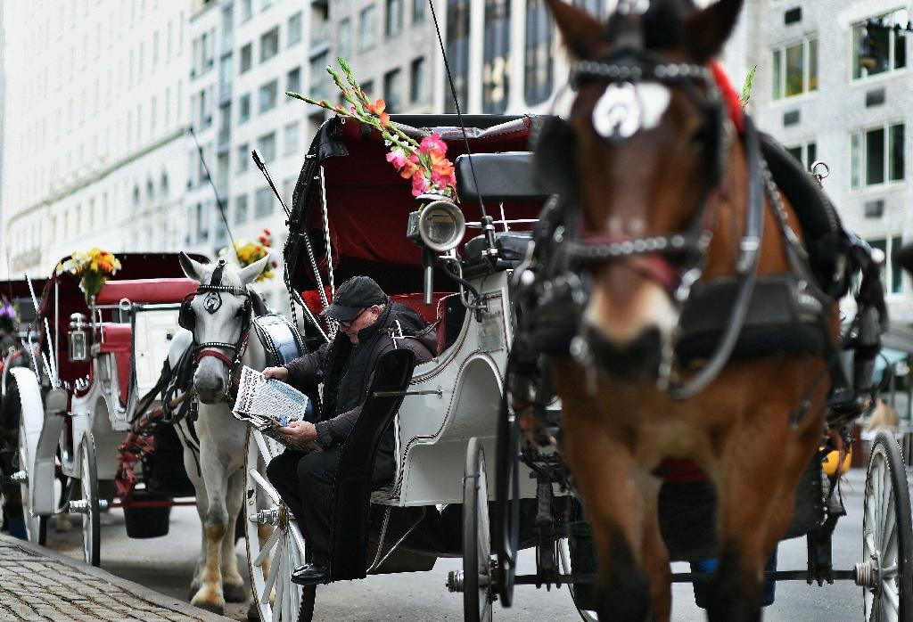 New York reached a deal late that will almost halve the number of horses licensed to perform carriage rides in Central Park after the mayor called them inhumane to animals (AFP Photo/Jewel Samad)