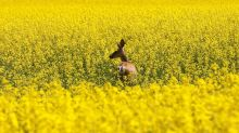 Canada, China talking to keep canola seed exports moving