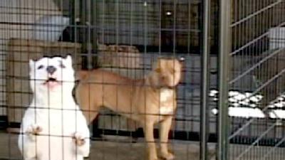 Search Warrant Served At Salinas Home In Dog Mutilation Case