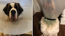 Woman shocked to find her dog's fur turned green overnight