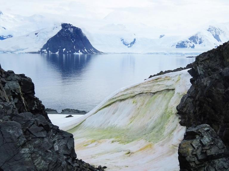 Although often considered devoid of plant life, Antarctica is home to several types of algae (AFP Photo/Matthew Davey)