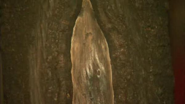 'Virgin Mary' tree burned in West New York