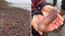 Wild storm washes strange-looking sea creatures onto beach