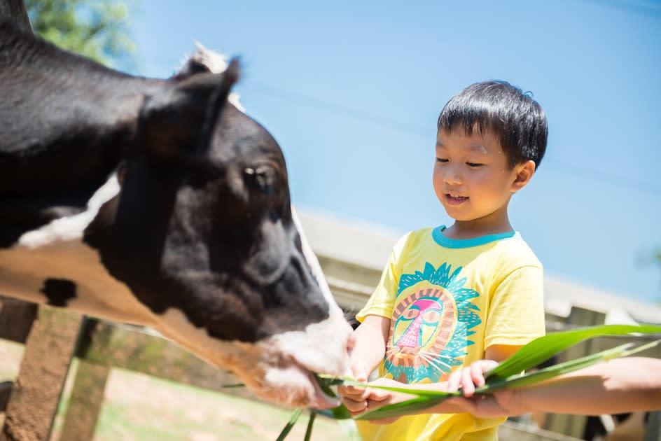 牛轉乾坤遊牧場!全台4大歐風牧場擠牛奶、餵牛寶寶喝ㄋㄟㄋㄟ