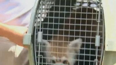 Escaped Red Panda Returns to National Zoo