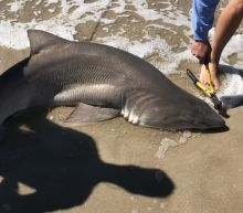 Shark Attacks On 2 Children At Long Island Beaches Draw Investigation