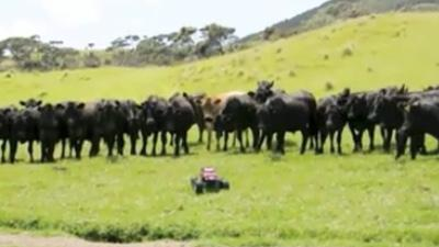 Toy Car Rounds Up Cattle
