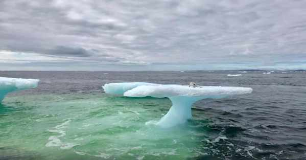 Fishermen See Seal On Iceberg, Then See What It Is
