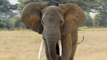 Botswana: Mystery elephant deaths caused by cyanobacteria