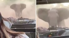 Aussie tourists film moment angry elephant rams car on safari