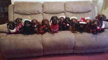 Wissens-Adventskalender: Türchen 20 - So werden Hundeliebhaber schlagartig in Weihnachts-Euphorie versetzt