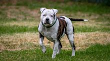 Man admits to decapitating housemate's dog