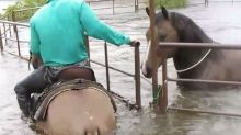 Watch Teen Brave Harvey Flood To Save Trapped Horse