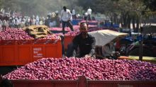 Bumper summer crop of onion likely, markets fear significant drop in prices