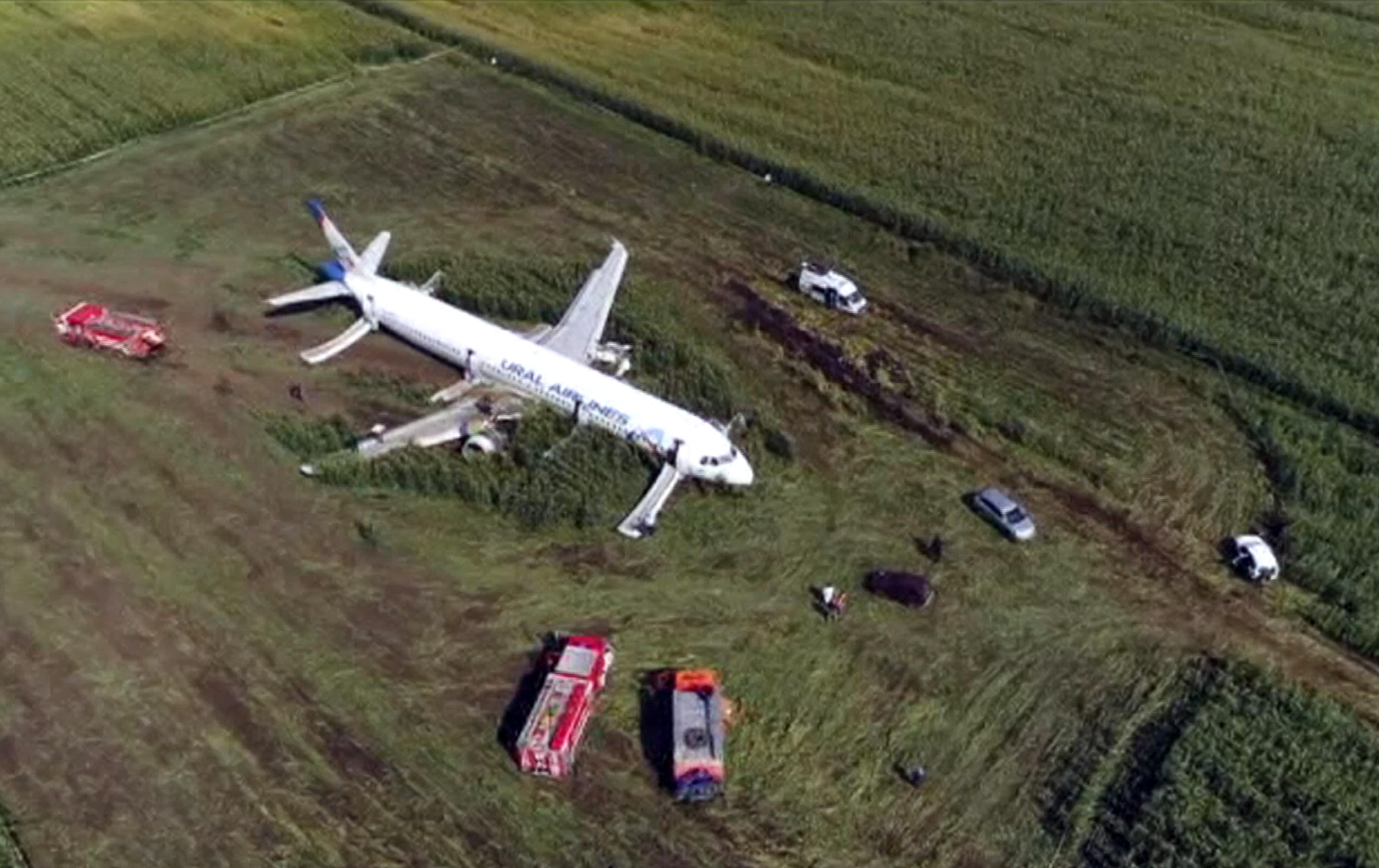 En este video capturado por la televisión rusa RU-RTR, se ve un avión A321 de Russian Ural Airlines después de un aterrizaje de emergencia en un campo de maíz cerca de Ramenskoye, en las afueras de Moscú, Rusia, el jueves 15 de agosto de 2019. A321 de Russian Ural Airlines , que transportaba a 226 pasajeros y una tripulación de siete, chocó con una bandada de pájaros mientras despegaba el jueves desde el aeropuerto Zhukovsky de Moscú. Las autoridades sanitarias rusas dijeron que 23 personas, incluidos cinco niños, han sido hospitalizadas con heridas. (Televisión rusa RU-RTR vía AP)
