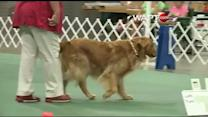 Dogs show off obedience skills
