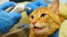 Paw-ly in the pandemic: pets can  catch virus from owners