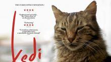 【影評】人貓共處《Kedi》