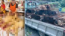 Truckload of dogs saved from China's 'dog meat' festival