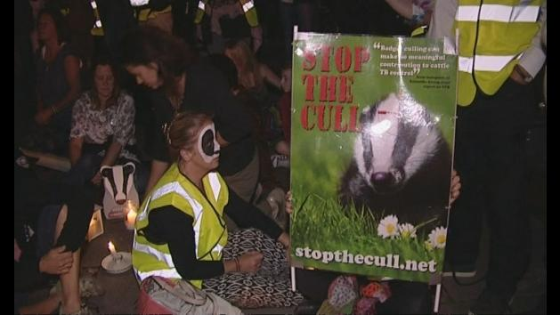 Brian May: Badger cull 'a disaster all round'