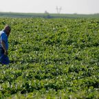 China Buys American Soybeans after Vowing to Boycott U.S. Farm Products