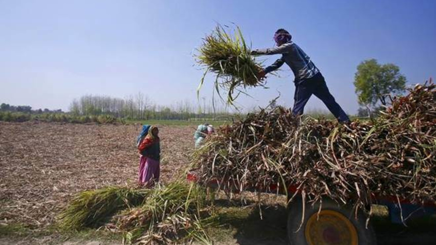 How smartphones and cheap data are helping farmers