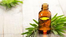Melaleuca: conheça os benefícios da planta que auxilia na cura de infecções