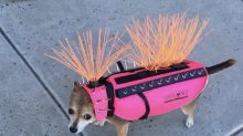 The internet is living for this dog's spiky, neon-pink outfit to ward off coyotes