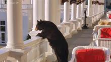 Black Bear Found Relaxing on Porch at Luxury New Hampshire Resort, Likely Waiting for Room Service