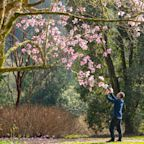 UK weather: Britain set for the hottest February day on record as early buds bring the scent of spring