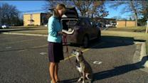 Thieves Take Van Of Dog-Spaying Non-Profit