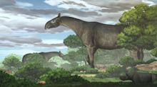 Fossils unearthed in China reveal a new species of giant prehistoric rhino - the largest land mammal to ever walk the Earth