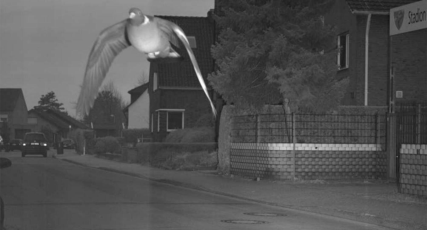 Pigeon sets off speed camera when flying too fast