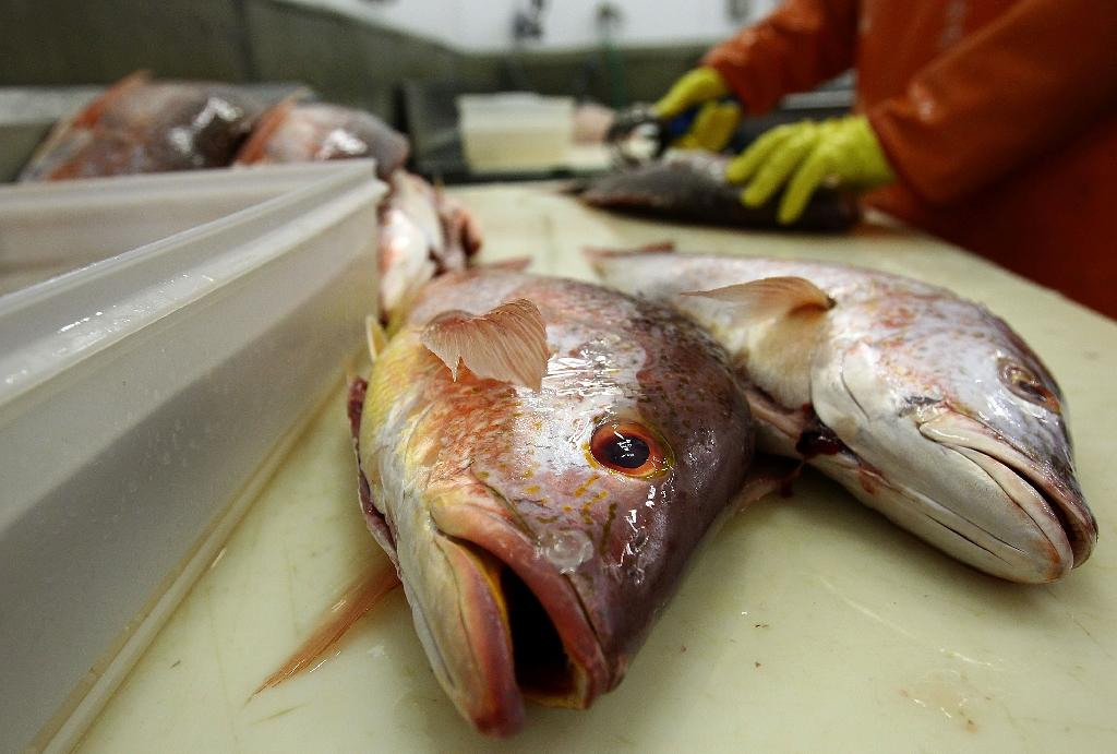 The NGO Oceana said it analyzed the DNA of 449 fish purchased from March to August 2018 in half of the US states and found that 94 were incorrectly labeled (AFP Photo/WIN MCNAMEE)