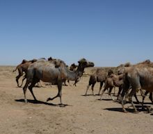 Chinese city in Inner Mongolia issues bubonic plague warning