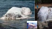 Mysterious white 'blob' becomes latest sea creature to wash up after Philippines earthquake