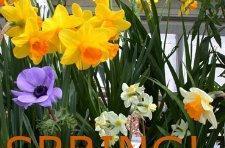 Gather around and watch the Spring dash update