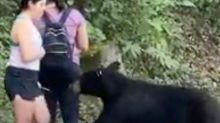 Wild bear that sniffed woman's hair is caught and castrated