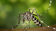 Repelling mosquitoes: Everything you need to know