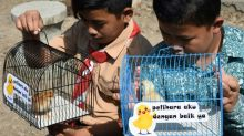 ChickTok: Indonesian kids given pets to wean them off smartphones
