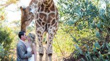 Tierische Fotobombe: Diese Giraffe will mit aufs Hochzeitsbild