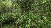 El encierro laborioso de un botánico colombiano en su inmenso jardín durante la pandemia