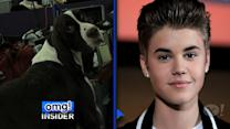 Meet the Stars' Canine Doppelgangers!