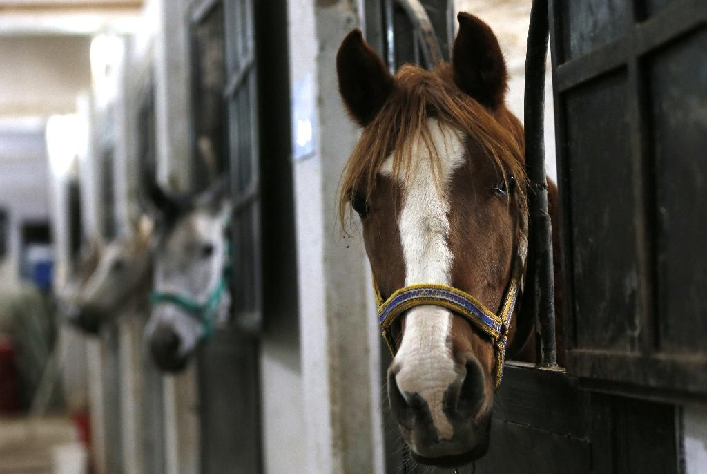 Of the 8,500 horses that Syria registered with the World Arabian Horse Organization in 2011, it has lost 3,000 in the war (AFP Photo/LOUAI BESHARA)