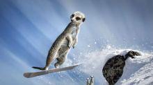 Mischievous meerkats take extreme holidays for 2013 calendar