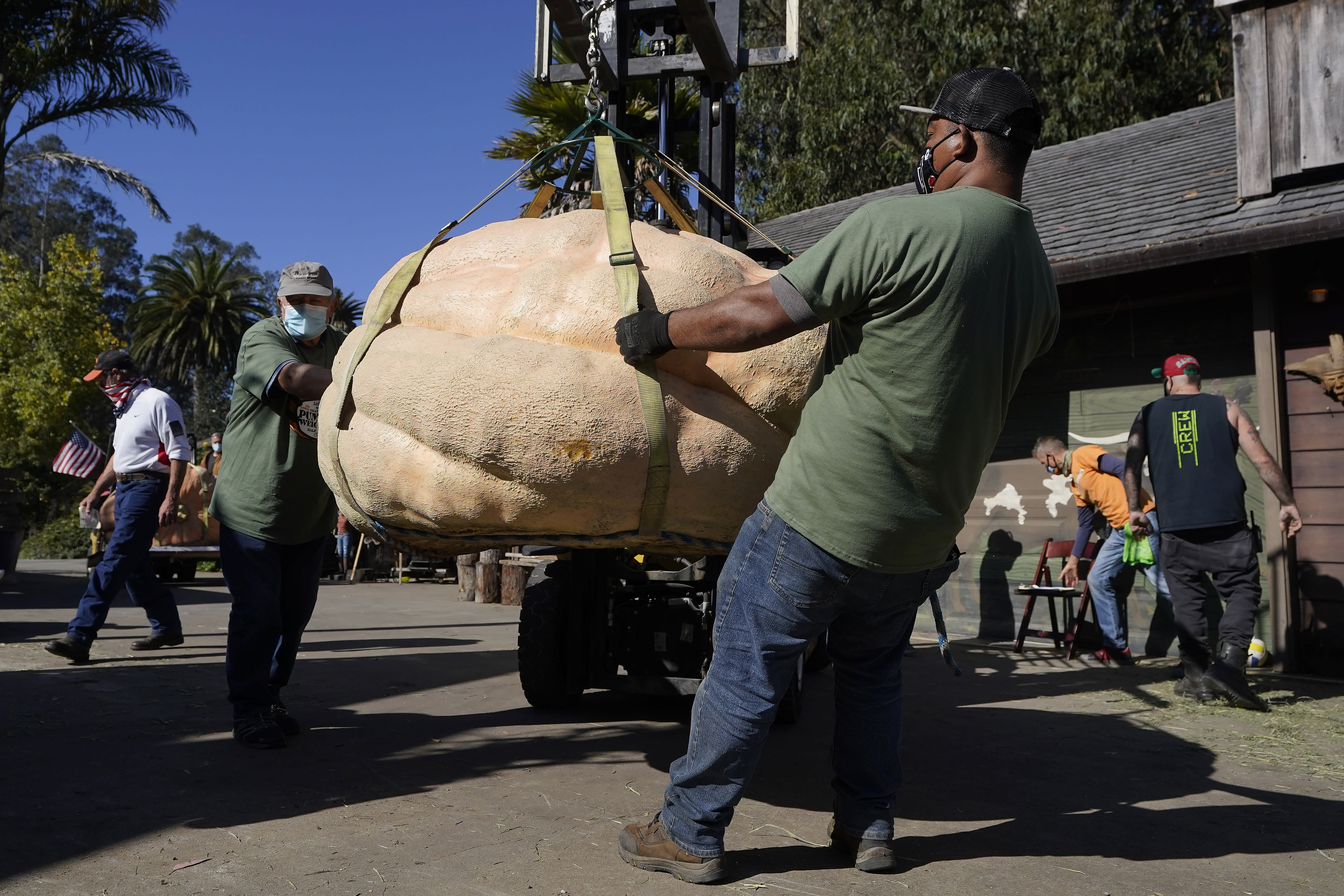 People haul a pumpkin to be loaded onto a scale to be weighed at the Safeway World Championship Pumpkin Weigh-Off in Half Moon Bay, Calif., Monday, Oct. 12, 2020. (AP Photo/Jeff Chiu)